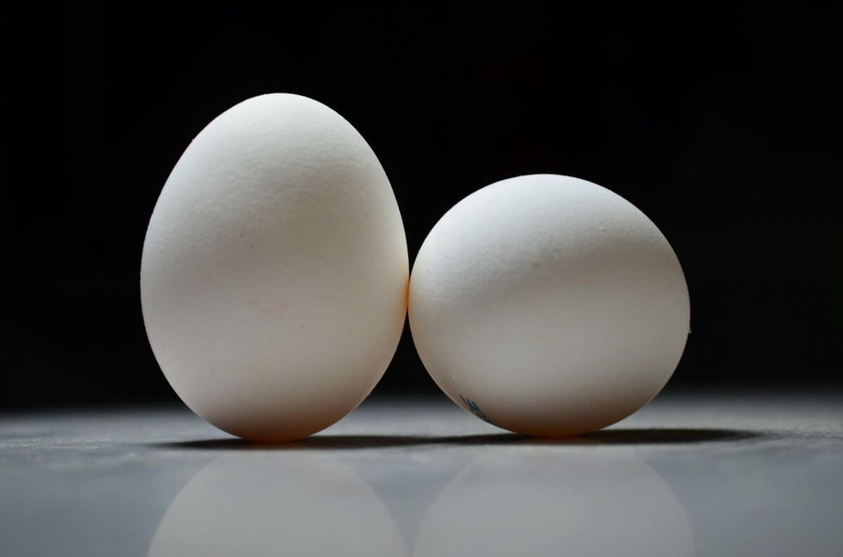 Can ducks lay 2+ eggs in one day? (You'll be surprised!)