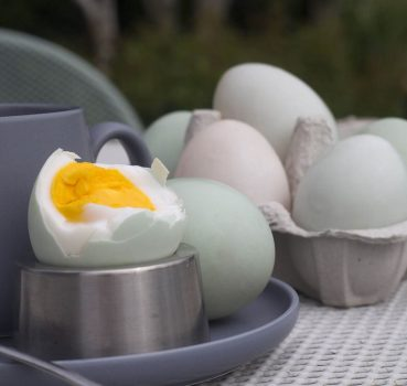 Duck Eggs and Egglaying: 20 Things You Need to Know